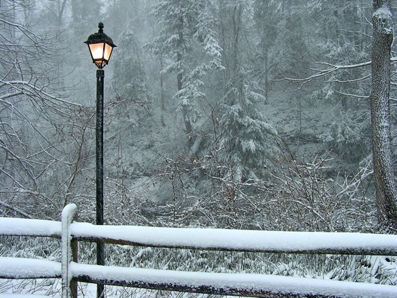 Winter Photography 5x7 Welcome to Narnia - Snow Scene