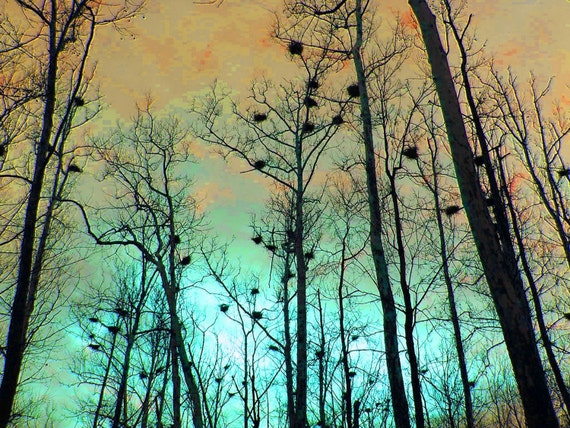 Color Photography Heron Heights 11x14 Gold Copper Aqua Teal