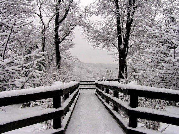 Winter Photo 5x7 Fine Art Snowfall Symmetry Winter Photography Print Black and White