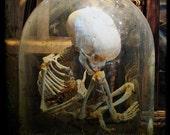 Skeleton Art, FTW, 5x5 Natural History Photography Print, Halloween Decoration