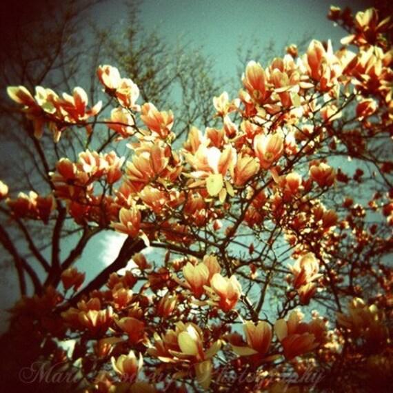 Magnolias, Nature Photography, 8x8 Metallic Fine Art Holga Print, Prospect Park