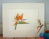 Bird of Paradise botanical illustration-mounted Strelitzia print-art for living room-gift for art lover-exotic flower painting-wall art