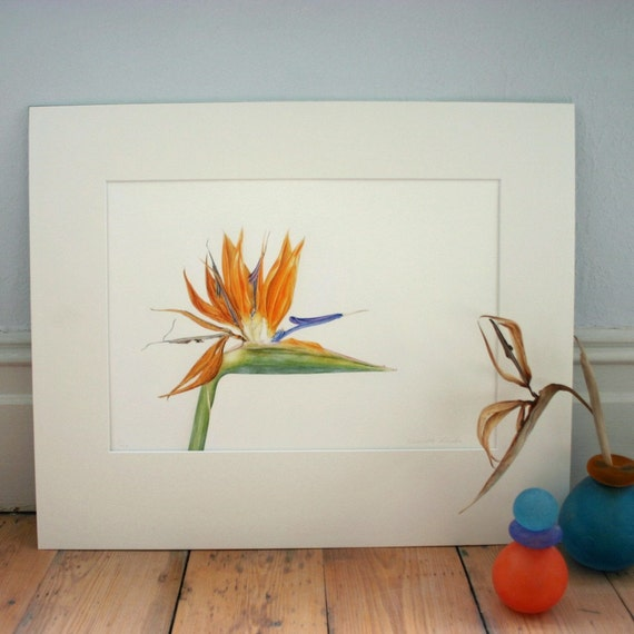 Bird of Paradise botanical illustration-mounted Strelitzia print-art for living room-gift for art lover-exotic flower painting-wall art