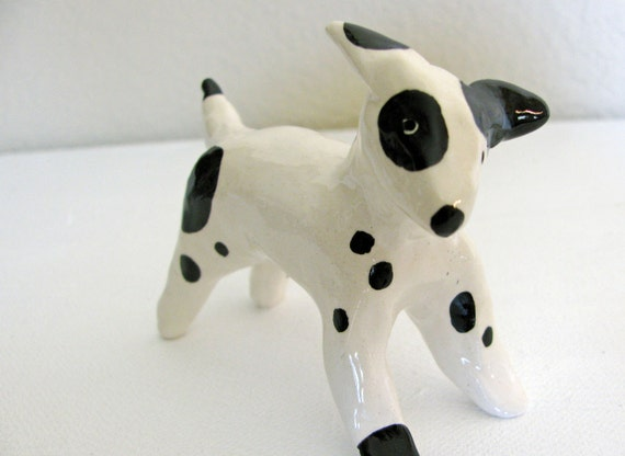 Black and White Spotted Pup