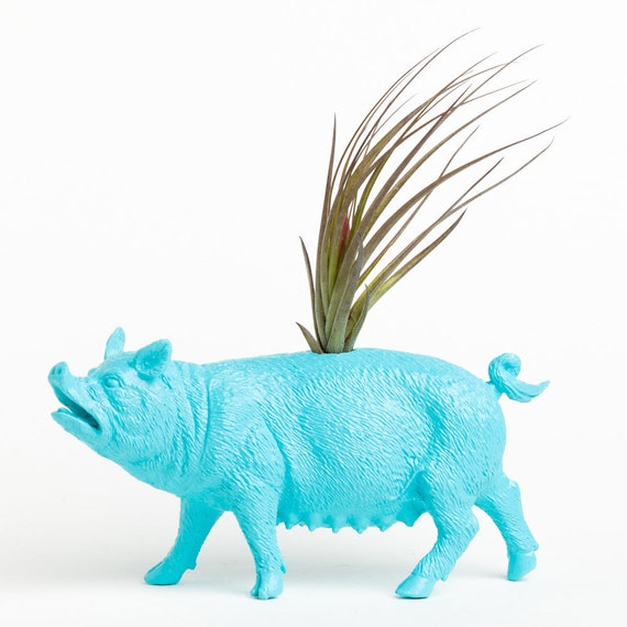 RESERVED For Kaitlyn Air Plant Planter- Pig Planter, College Dorm Geekery