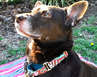 Martingale Collar - You Pick Design
