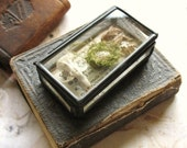 Natural History Pocket Museum - Glass Box Assemblage