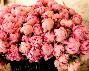 Nature Photography, Bathroom Decor, French Market Fragrant Peony, deep pink wall art, southern france peony, french home decor