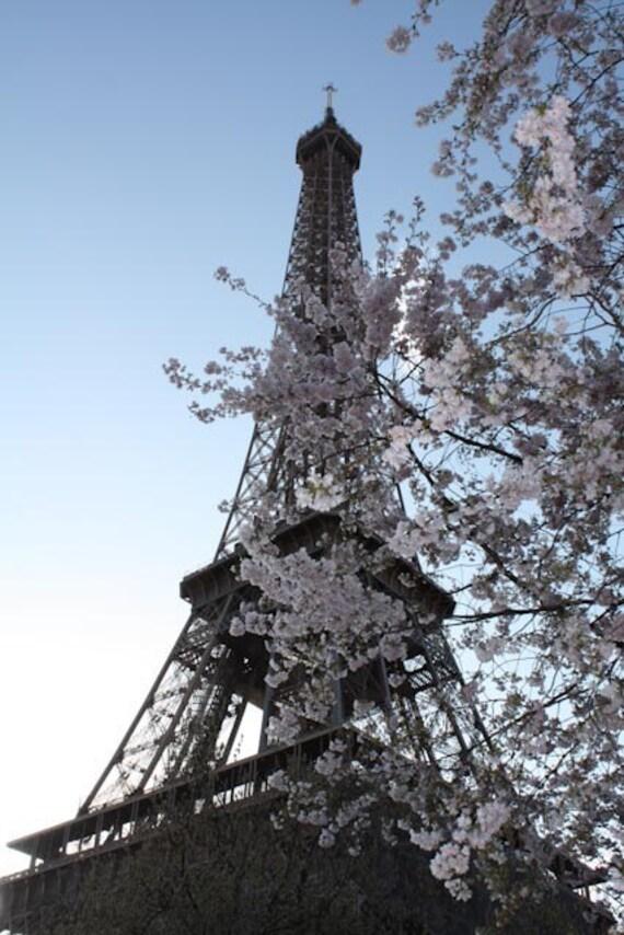 Items Similar To Paris Photography Paris Cherry Blossoms