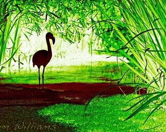 Flamingo - 8 x 12 Photographic Print