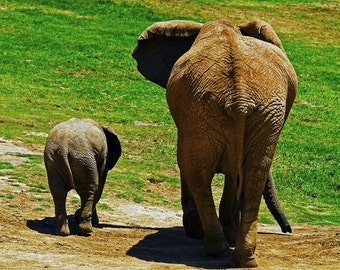 Elephant Mother and Child - 8 x 8 Photographic Print