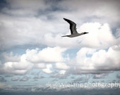 Nautical photograph -  On The Fly - 11 x 14 fine art color photograph - sky blue and gray