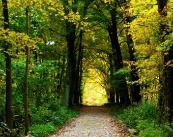 Forest landscape photo - The Road Not Taken - 8 x 10 fine art photograph - vibrant greens and yellows