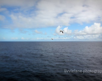 Nautical photo - Take Flight - 11 x 14 fine art color photograph - azure cerulean dark navy blue
