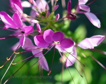 Flower photography - Awakened - 11x14 Fine Art Photo -  purple lilac gray white background contemporary modern home decor