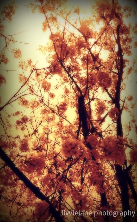 Nature photography - Burst Into Light - 12 x 18 fine art color photograph - peach golden yellow rust wine burgundy
