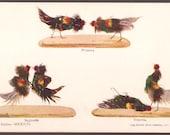 Cockfighting Mexico Vintage Postcard - Pelea de Gallos
