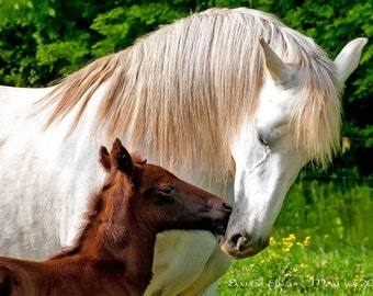 Mother and Child, fine art equine photograph