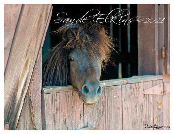 Bam-Bam, fine art equestrian photography