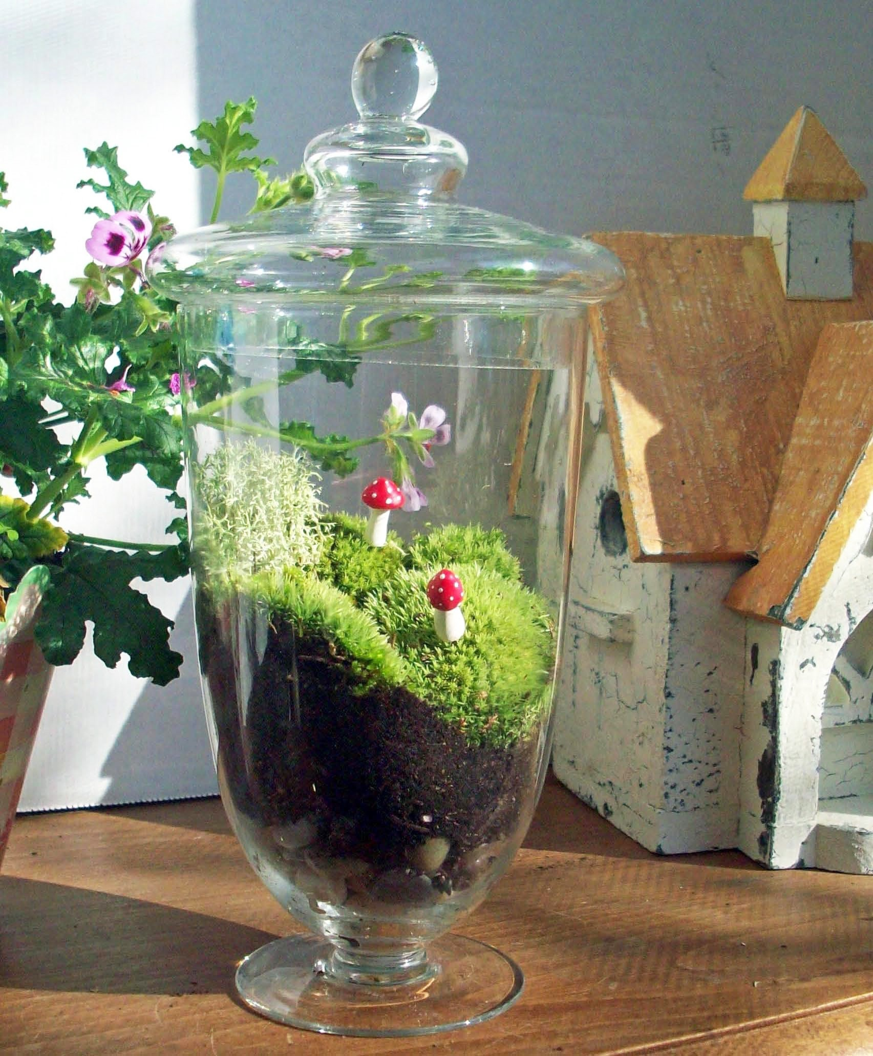 Apothecary Jar Terrarium No 31