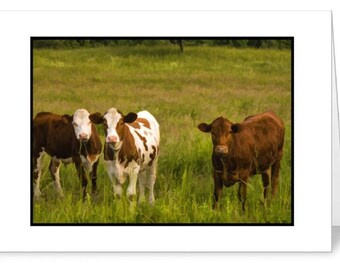 Cows 5 x 7 Blank Note Card