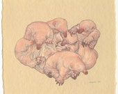 cuddling puggles
