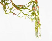 Wool nuno felted scarf Spring green spring fish net