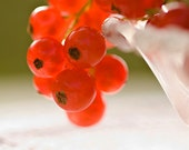 Red photograph - Currants - 8x8 Kitchen Art Print - fruit food berries garden holiday kitchen home decor