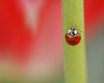 Ladybug Nursery art - Red photography - Fly Away Home - 8x10 fine art print