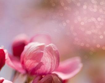Pink flower picture - Cherry Blossom Unfurling - 8x8 Fine Art Print - fairy tale girl nursery art whimsy