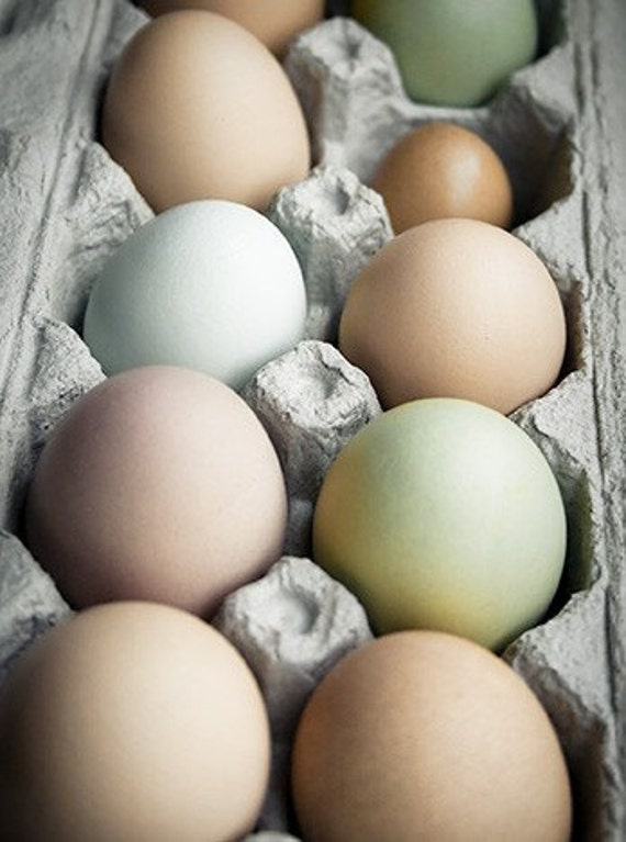 Egg food photography - Ova - 8x10 kitchen art print - organic free-range eggs Farmers market