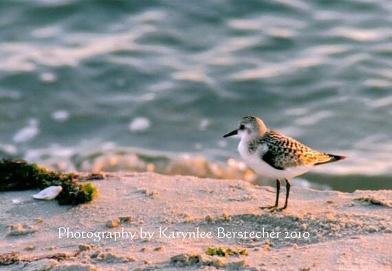 Wistful Sandpiper, Shore Photography, Fine Art Photography, Matted Photography, Beach Decor, Home Decor, Nature Photography, Hostess Gift