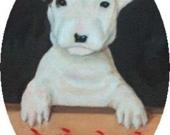 Phoebe- Bull Terrier