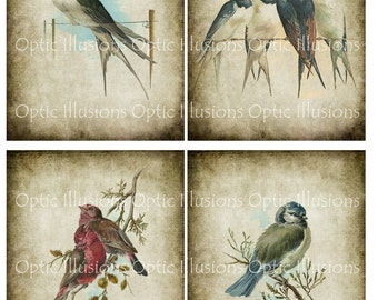 Vintage Bird Illustrations - Special - Four Pictures - 4x5 Inch - Pictures 1 thru 4 - Card Supplies, Scrapbooking -  INSTANT DOWNLOAD -3.50