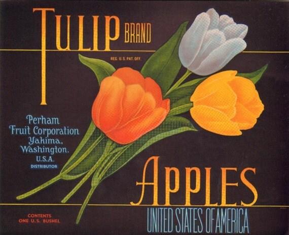 Vintage Tulip Brand Apple Labels Perham Fruit Corp. Yakima, Washington