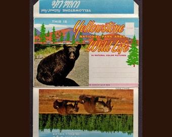Yellowstone National Park Area Wild Life Vintage Souvenir Scenic  Postcard folder 1950s