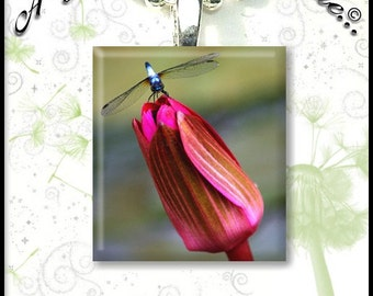 Tulip and Dragonfly