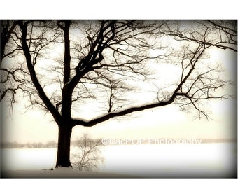 Landscape Photograph, Quiet Tree, 11x14 Sepia Fine Art Photograph on Metallic Paper