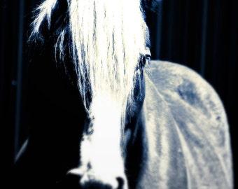 Dramatic Horse - Fine Art Photograph on Metallic Paper