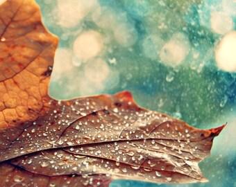 Leaf Droplets Fine Art Nature Photography