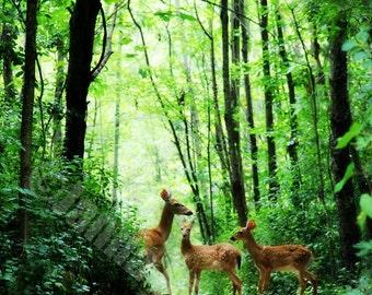 Deer Fawns Nature Fine Art Photography on Metallic Paper
