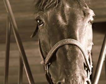 Horse  Fine Art Animal Photography on Metallic Paper