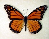Mother's Day Gift Best Seller 18 Years The Monarch Butterfly Conservation 111