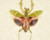 Real Colorful Female Preying Mantis Framed Display 2292