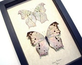 Wedding Gift Mother Of Pearl Pair Real Butterfly Conservation Display 200P