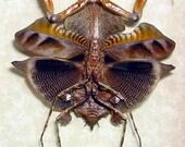 Amazing Preying Mantis Leaf Mimic Real Framed Insect 7904v