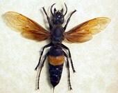Real Framed Huge Banded Wasp Large Stinger 7994