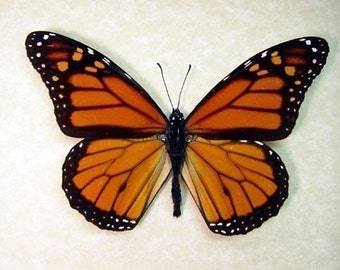 Black Friday/Cyber Monday Sale Best Seller 18 Years The Monarch Butterfly Conservation 111