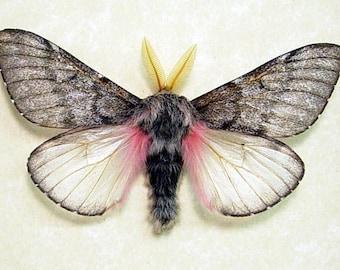 Real Framed Fuzzy Furry Pink Teddy Bear Moth 7875