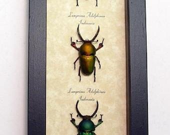 Beetles 7972